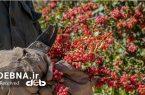 اهمیت کشاورزی در اقتصاد ایران