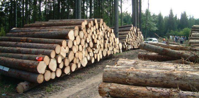 صنوبرکاری؛ راهکاری برای جلوگیری از تخریب جنگل