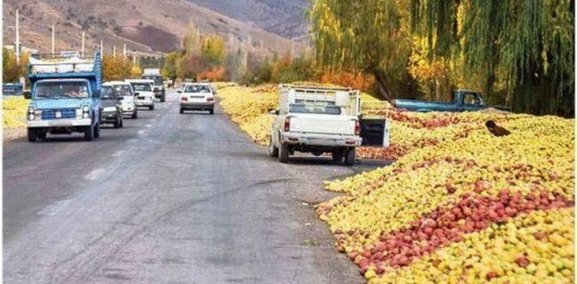 سه اقدام دولت برای حمایت از باغداران/سیب صادر و ذخیره سازی می شود
